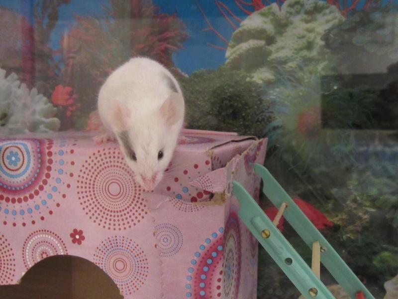 Meet My Mice 4_22_210