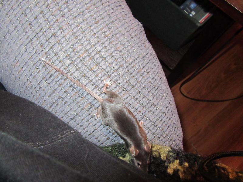 Meet My Mice 4_22_211