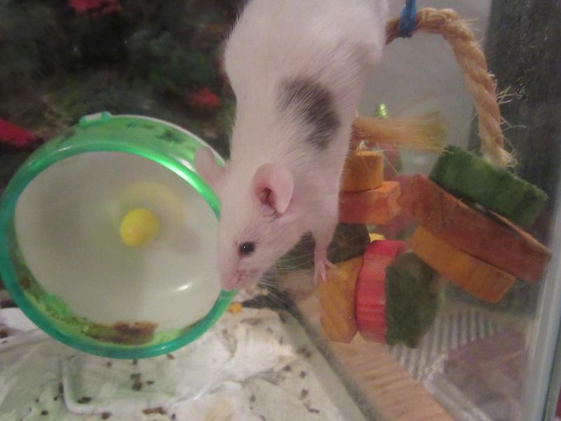 The Mice I've Had 4_22_218