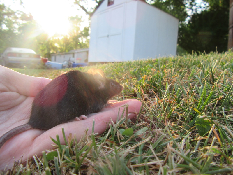 The Mice I've Had 6_26_216
