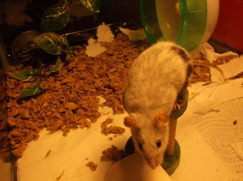 The Mice I've Had Nice_p11