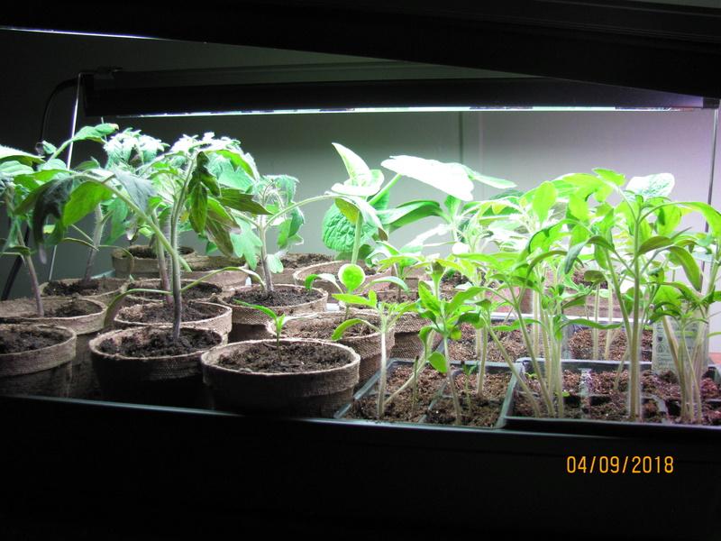 Aero Garden for starting seeds? Img_0210