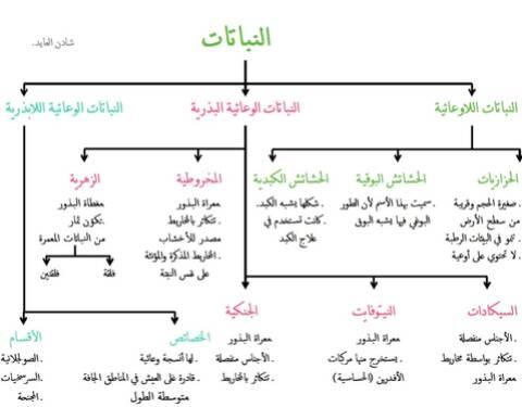 خريطة مفاهيم الفصل الأول (النباتات)