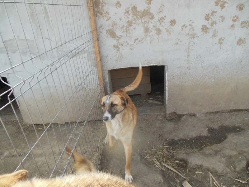 CHOREA, née en sept 2016 (chiot d'AKELA) - Famille sauvée par Lenuta dans un champ-parrainée par Mirko78-R-SOS-SC 6bfdca10