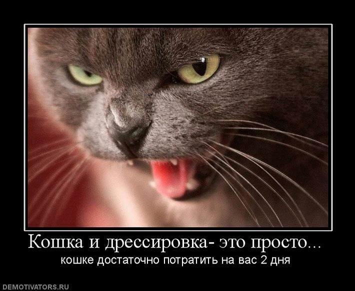 Типичный кот - Страница 3 Aoe10