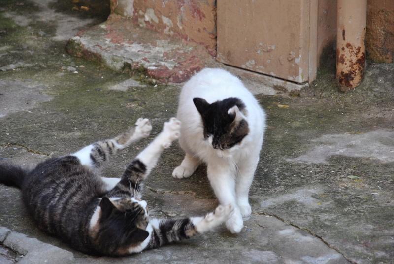 Типичный кот - Страница 4 Uaeeza15