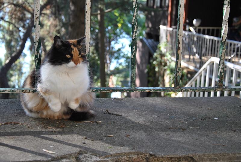 Типичный кот - Страница 4 Uaeeza19