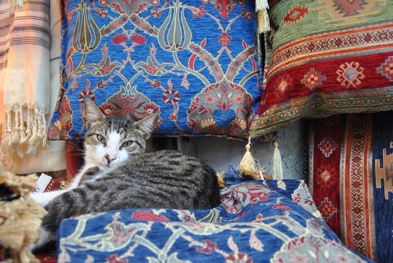 Типичный кот - Страница 4 Uaeeza21