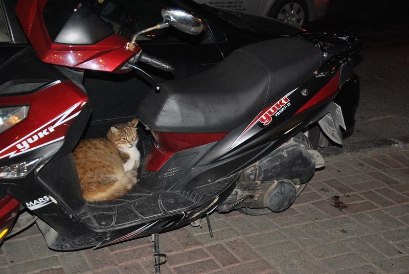 Типичный кот - Страница 4 Uaeeza22
