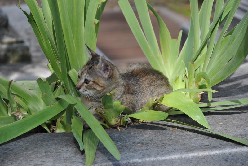 Типичный кот - Страница 4 Uaeeza24