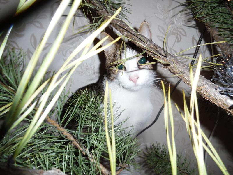 Типичный кот - Страница 4 Uaeeza28