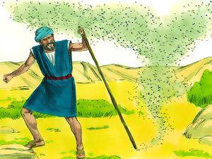 Moïse est l'envoyé de Dieu pour libérer les Israélites de l'esclavage 009-mo16
