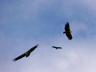 Ritspa : L'amour passionné d'une mère combattant l'horreur Vultur10