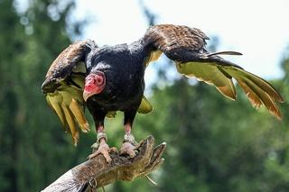Ritspa : L'amour passionné d'une mère combattant l'horreur Vultur11