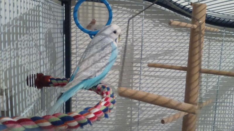 Mes oiseaux 23484610
