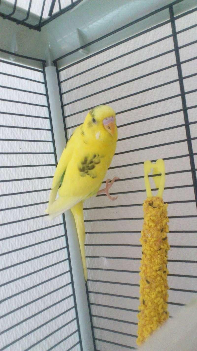 Mes oiseaux Dsc_0611