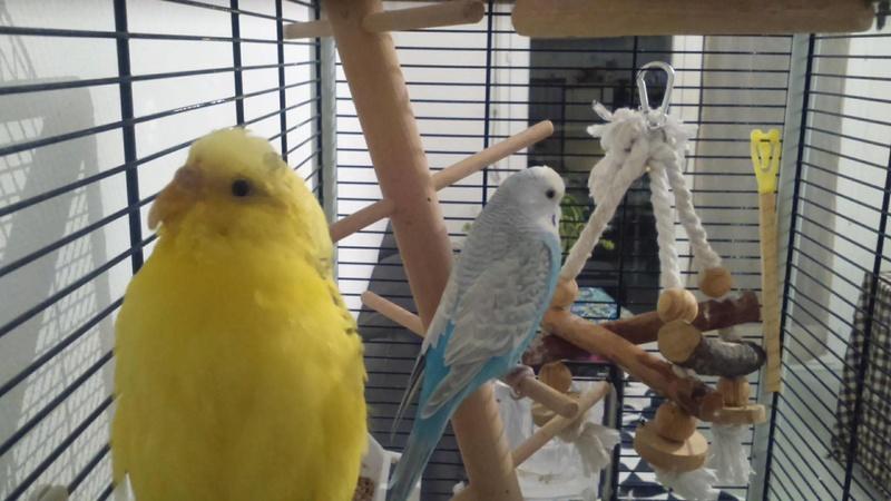 Lisa et ses oiseaux Zizoue10