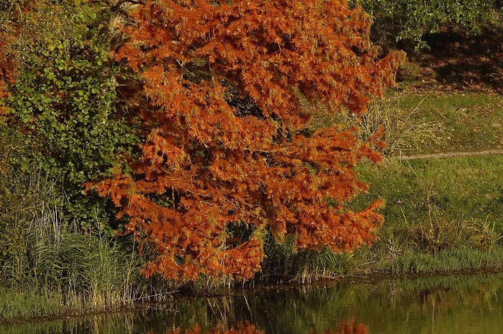 C'est l'automne au bord du Lac Dsc00113