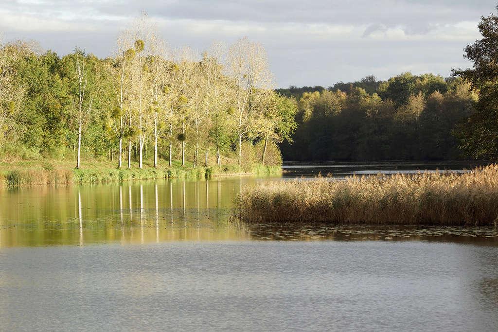 C'est l'automne au bord du Lac Dsc00114