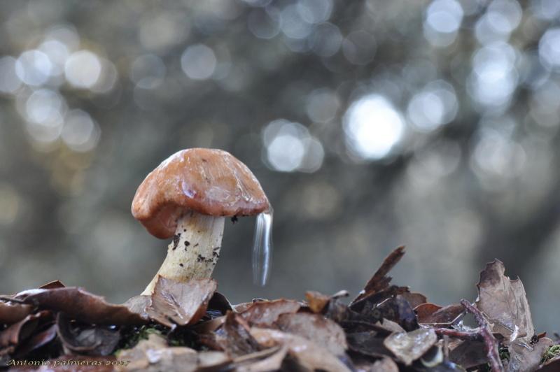 Bajo la lluvia  . Setas_18
