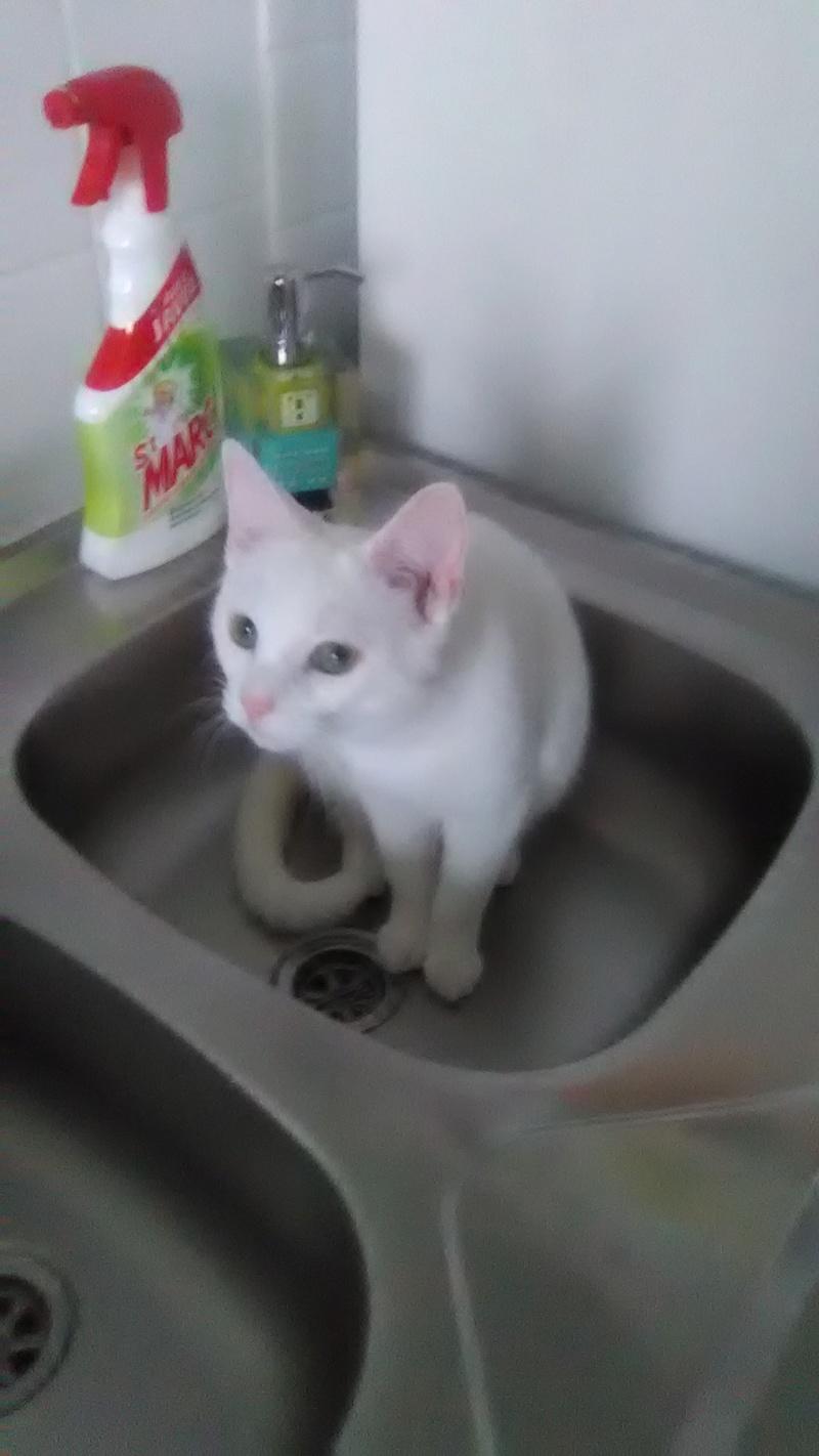 8 août : Journée internarionale du chat — le chat dans toute sa beauté - Page 5 Img_2012