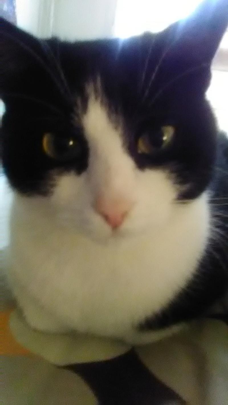 8 août : Journée internarionale du chat — le chat dans toute sa beauté - Page 5 Img_2013