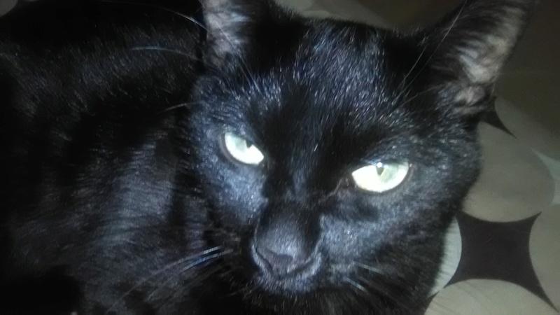 8 août : Journée internarionale du chat — le chat dans toute sa beauté - Page 5 Img_2015