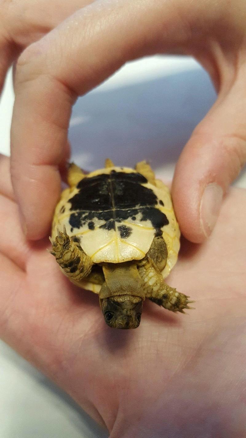 Identification de ma petite tortue Receiv10
