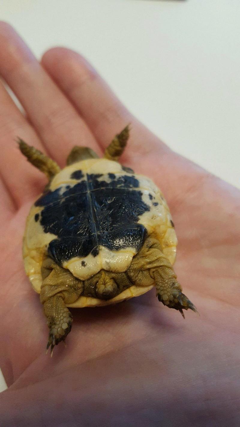 Identification de ma petite tortue Receiv11