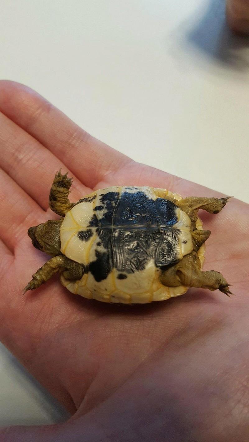 Identification de ma petite tortue Receiv12