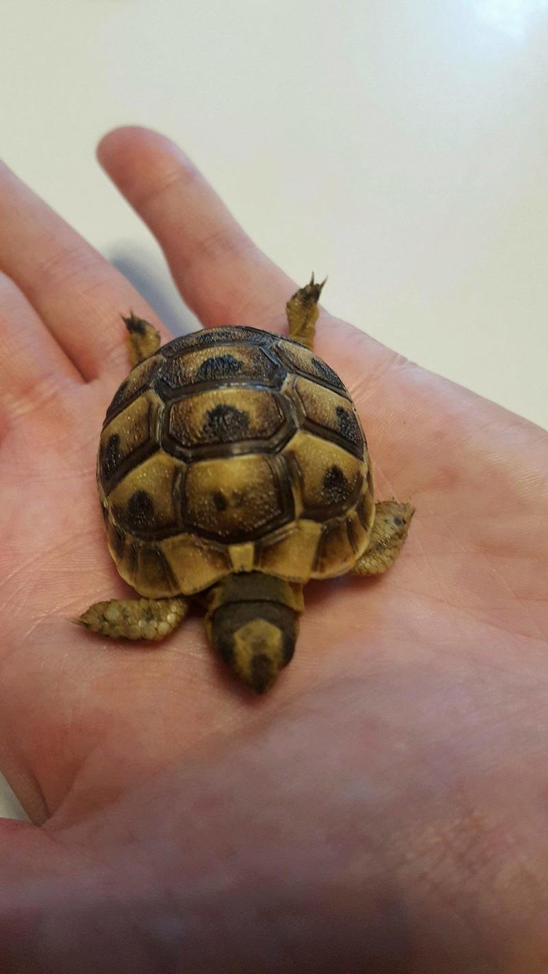 Identification de ma petite tortue Receiv13