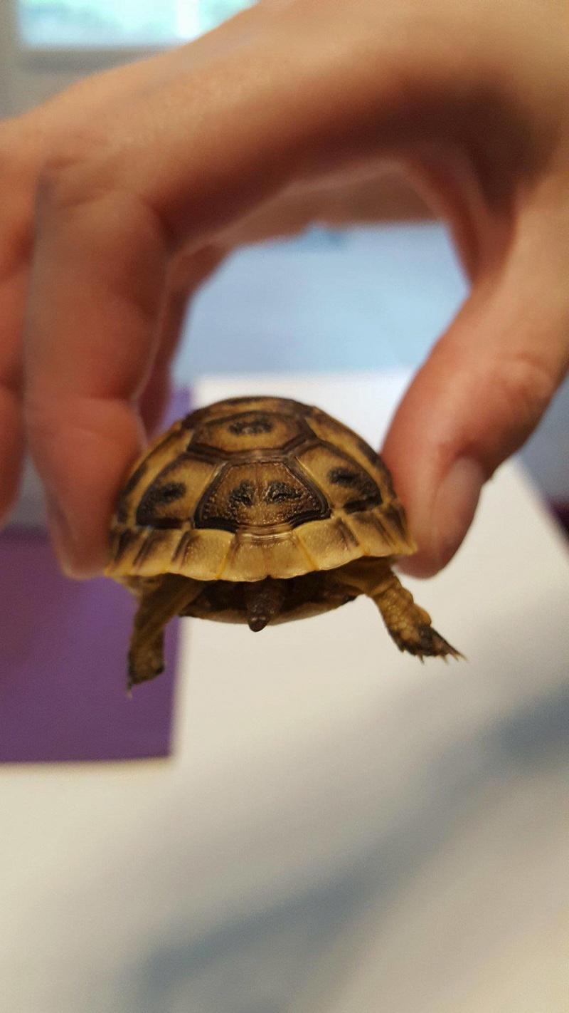 Identification de ma petite tortue Receiv14