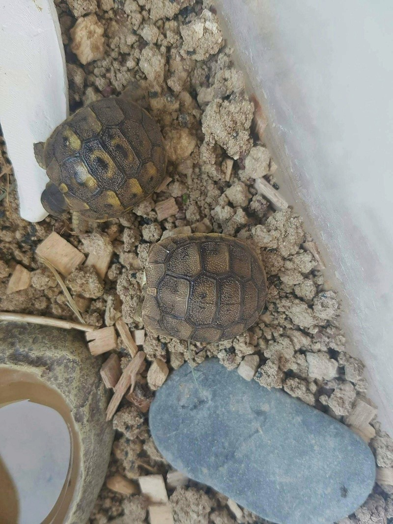 Tortue 3 identification Receiv40