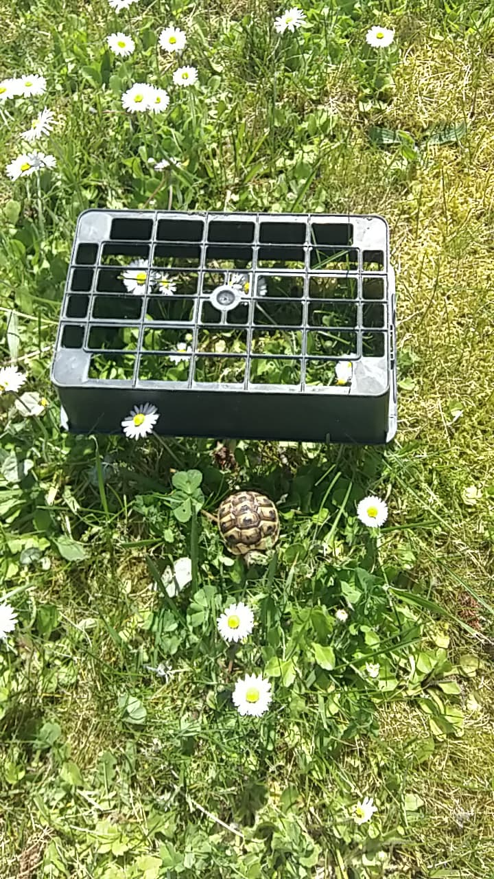 Tortue 3 identification Receiv42