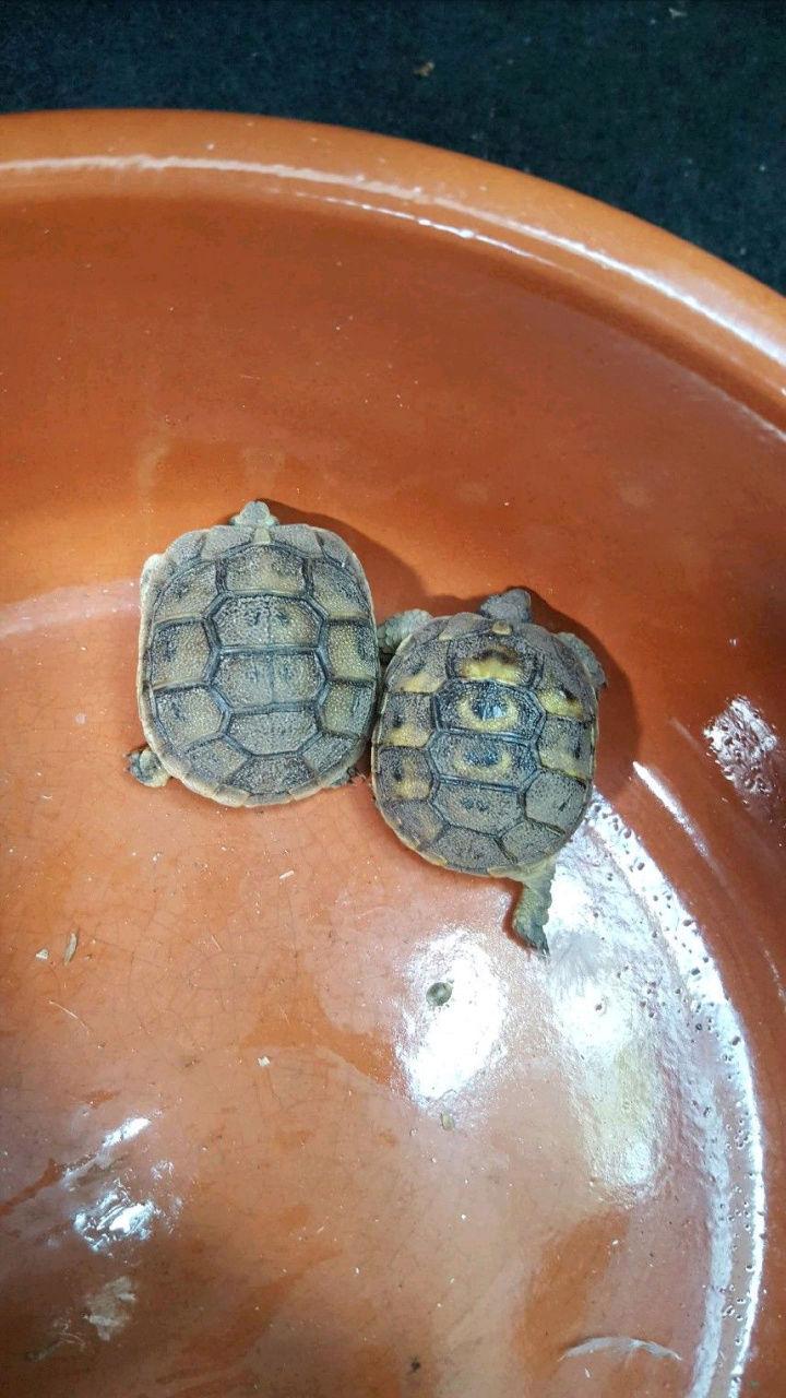 Identification de ma petite tortue Screen10