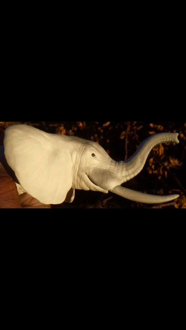 Ma tête d'éléphant  Img_1913