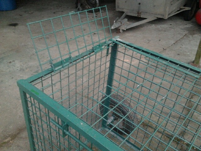 mes cages Cage511