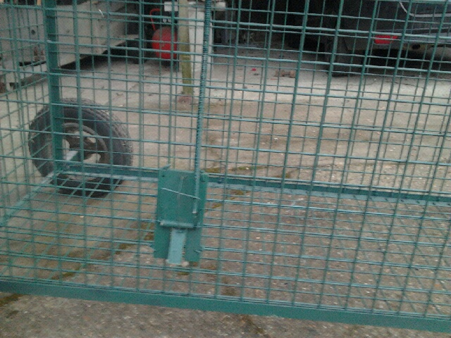 mes cages Cage611