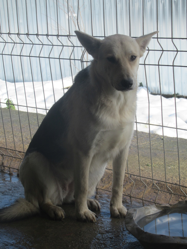 ANGIE - femelle croisée de taille moyenne, née environ en mars 2015  - REMEMBER ME LAND - En FA chez Lanatesla (30) 1_1510