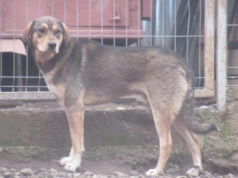 SIRTAKI - mâle croisé de grande taille, né en 2015 (PASCANI) - REMEMBER ME LAND Img_8710