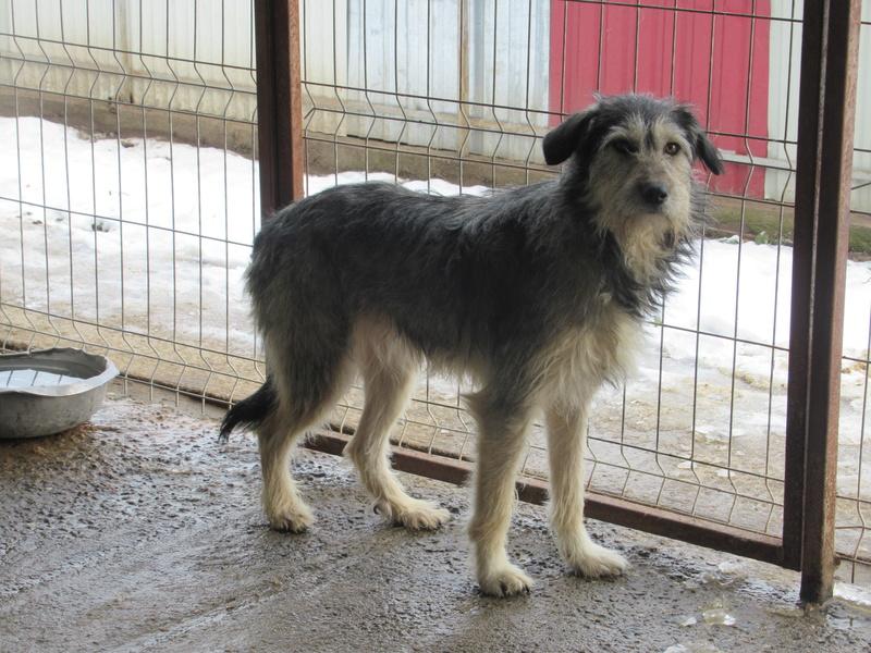 KAYLA - x griffon 3 ans (3 ans de refuge)  Asso Remember Me (Roumanie) Kayla_15