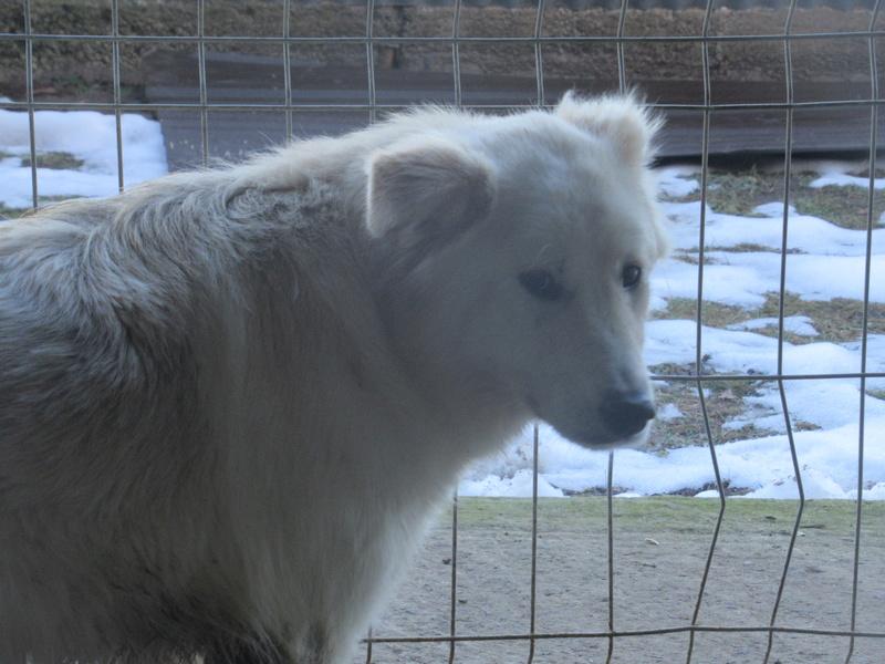 KIOWA !! + de 3 ans de box !! femelle, née environ en mars 2014, taille moyenne (Pascani)- REMEMBER ME LAND - Page 2 Kiowa_10