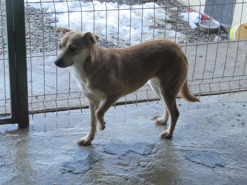 MAIKA - chienne croisée de taille moyenne, née 2015 - (Pascani) REMEMBER ME LAND Mayka_11