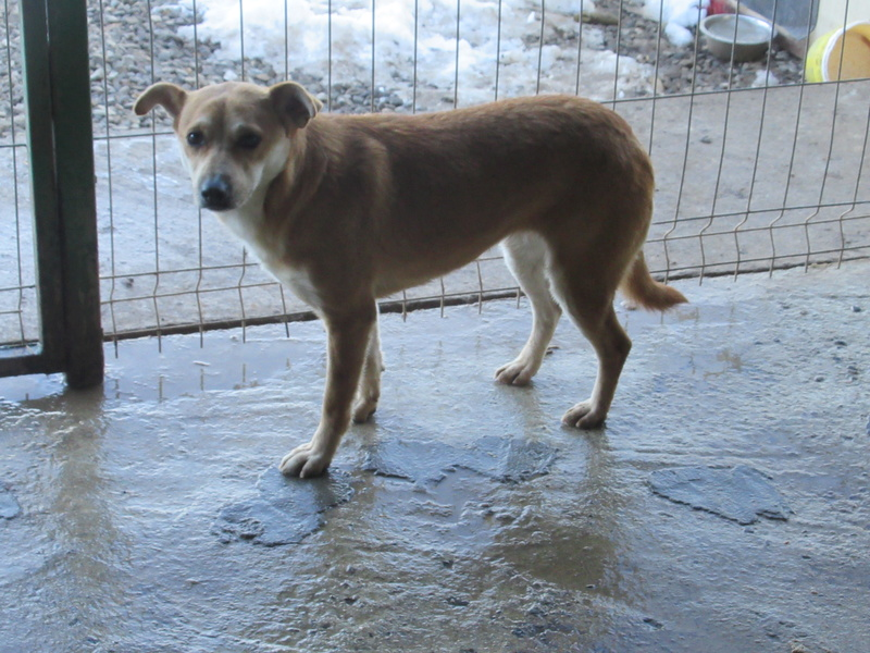 MAIKA - chienne croisée de taille moyenne, née 2015 - (Pascani) REMEMBER ME LAND Mayka_12