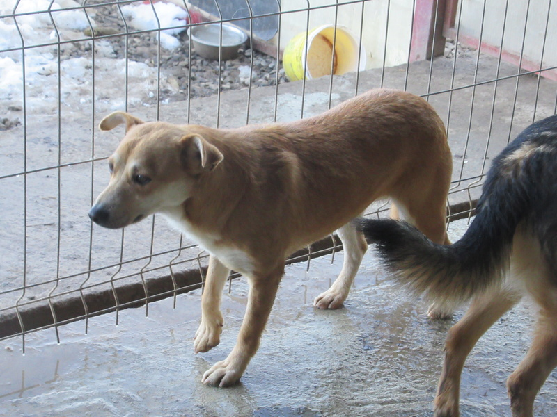 MAIKA - chienne croisée de taille moyenne, née 2015 - (Pascani) REMEMBER ME LAND Mayka_14