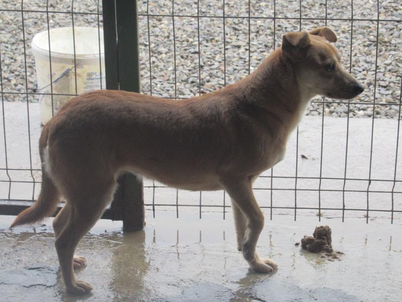 MAIKA - chienne croisée de taille moyenne, née 2015 - (Pascani) REMEMBER ME LAND Mayka_16
