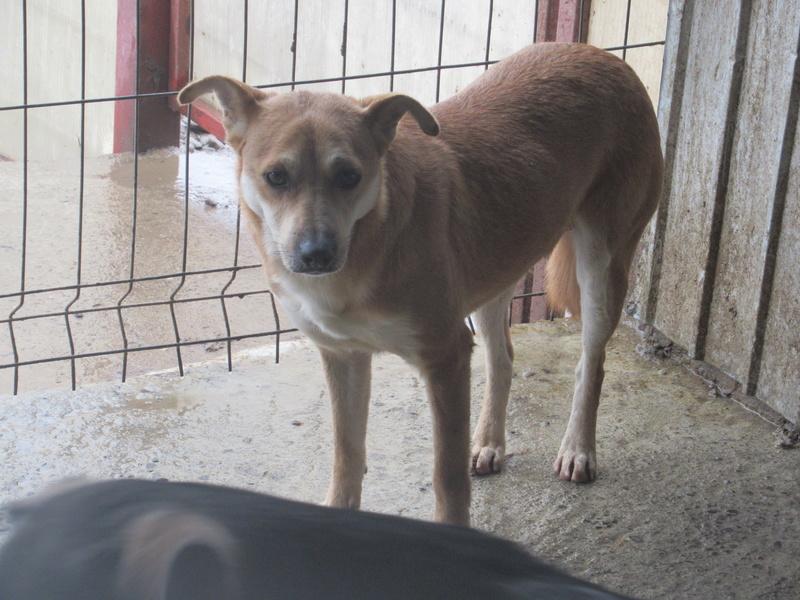 MAIKA - chienne croisée de taille moyenne, née 2015 - (Pascani) REMEMBER ME LAND Mayka_17