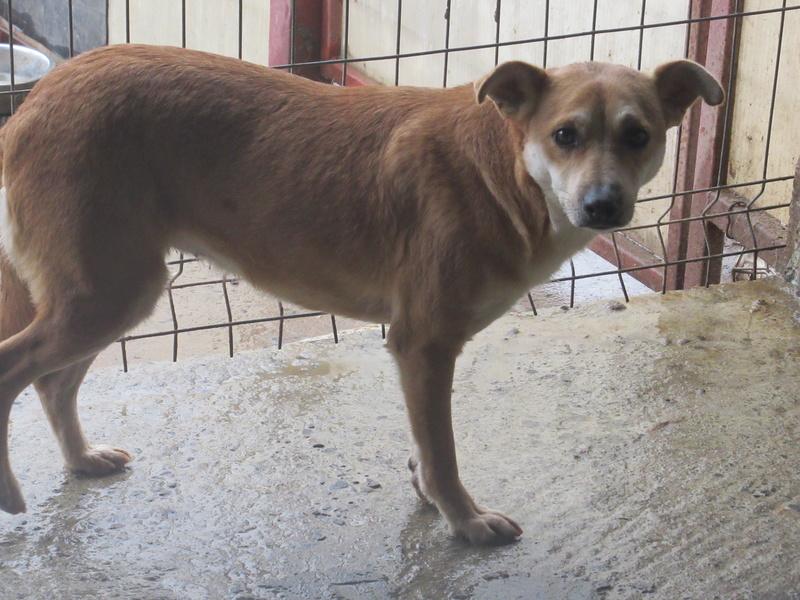 MAIKA - chienne croisée de taille moyenne, née 2015 - (Pascani) REMEMBER ME LAND Mayka_18