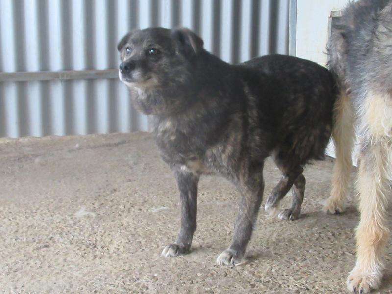 MIGNONNE - femelle, croisée, née environ août 2012, de petite taille - REMEMBER ME LAND - En FA chez Armelle (94) - Page 2 Mignon21