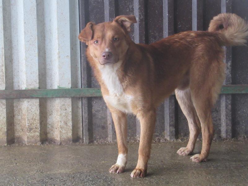 SANKUKA, mâle, croisé, né en 2014, taille moyenne 20kg - REMEMBER ME LAND Sankuk11